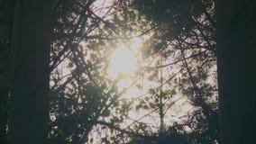 De zon tussen de bladeren van de bomen stock video