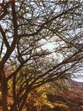 De Zon van bergbomen Stock Fotografie