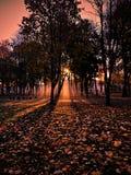 De zon van de bladerenbomen van de de herfstochtend stock foto