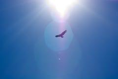 De Zon van de condor Stock Afbeeldingen