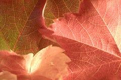 De zon van de herfst Royalty-vrije Stock Fotografie