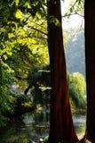 de zon van de het waterbezinning van het de herfstmeer Stock Afbeelding