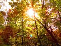 De Zon van de lente Royalty-vrije Stock Afbeeldingen