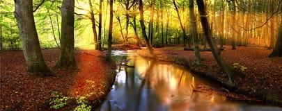 De zon van de middag in het bos Stock Afbeeldingen