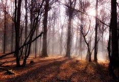 De zon van de ochtend Stock Foto's
