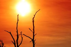 De Zon van de opstand achter de bomen Stock Afbeelding
