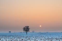De zon van de winter royalty-vrije stock afbeelding