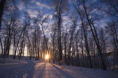 De zon van de winter in Siberië stock afbeelding