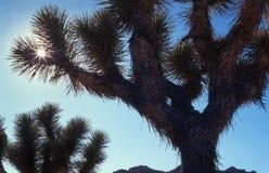 De zon van de woestijn schroeit het landschap stock afbeelding