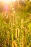 De zon van de zomer stock foto's