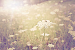 De Zon van de zomer stock fotografie