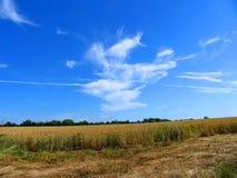 De zon van de zomer op het landbouwbedrijf Stock Afbeeldingen