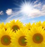 De zon van de zomer over het zonnebloemgebied Royalty-vrije Stock Afbeeldingen