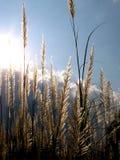 De Zon van het bosje n Stock Foto's