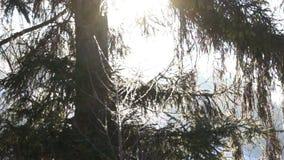 De zonboom van de de wintersneeuw stock videobeelden