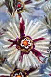 De zondag van de palm voor Pasen Royalty-vrije Stock Foto