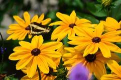 De zonnebloem en de Reus slikken Staartvlinder Royalty-vrije Stock Afbeeldingen