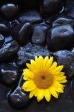 De zonnebloem van Aromatherapy Royalty-vrije Stock Afbeelding