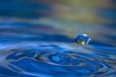 De Zonnebloem van de Daling van het water Stock Afbeeldingen