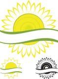 De zonnebloem van het symbool Stock Foto