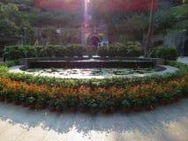 De zonnebloemen en de lotusbloem bloeien begroetende bezoekers bij de ingang van een lokaal park royalty-vrije stock afbeeldingen