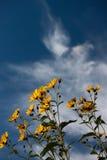 De zonnebloemen van de schoonheid met blauwe hemel Stock Afbeelding