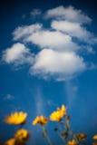 De zonnebloemen van de schoonheid met wolken Stock Fotografie
