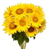 De zonnebloemen van het bloemboeket op witte achtergrond De zaden en de olie Bloemenregeling Schilderachtige en conceptuele scène stock afbeeldingen