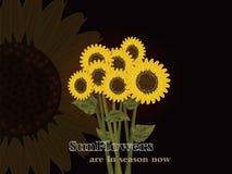 De zonnebloemen zijn nu in seizoen!! Stock Illustratie