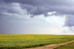 De zonnebloemgebied van Stormcloud Stock Foto