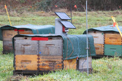De zonnekoeler van de Bijenbijenkorf Stock Afbeeldingen