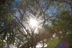 De zonneschijn glanst door de takken stock afbeeldingen