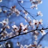De zonneschijn van de lente Royalty-vrije Stock Foto