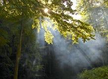 De zonneschijn van de ochtend in een bos Stock Foto