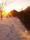 De zonneschijn in wintergarden Stock Foto's