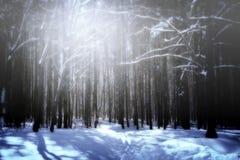 De Zonnestraal en de Pijnboombomen van het de winterzonlicht in Natuurlijk Bos stock afbeeldingen
