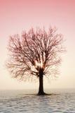 De zonnestraal komt door de boomkroon De wintersprookjesland Royalty-vrije Stock Afbeeldingen