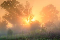 De zonnestralen glanzen door mist bij boom. Landelijk landschap Stock Fotografie