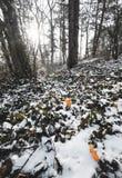 De zonnestralen van de Beatifullochtend in de winterbos, bomen met sneeuw op achtergrond worden behandeld die royalty-vrije stock fotografie