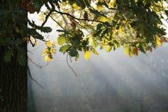De zonnestralen van de herfst royalty-vrije stock foto