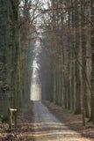 De zonnige bossteeg van de winter royalty-vrije stock afbeelding