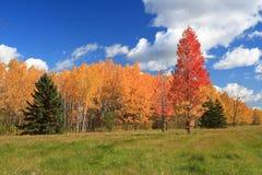 De zonnige dag van de herfst Stock Foto's