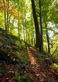 De zonnige dag van de herfst in berg Karpatisch bos Stock Foto
