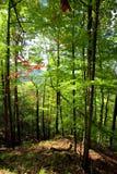 De zonnige dag van de herfst in berg Karpatisch bos Stock Afbeeldingen