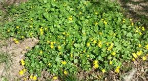 De Zonnige dag van het bloemtapijt stock afbeelding