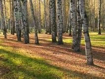 De zonnige herfst stock foto's