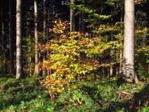 De zonnige herfst in het hout Royalty-vrije Stock Afbeelding