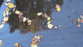 De zonnige de herfstdag in het zwembad van berkbladeren wees op gele draadboom stock video