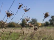 De zonnige, kleurrijke herfst in Londen - droge weiden en blauwe hemel royalty-vrije stock afbeeldingen