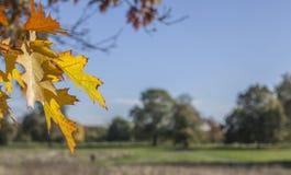 De zonnige, kleurrijke herfst in Londen - weiden en bomen royalty-vrije stock foto's